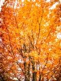Fully Autumn