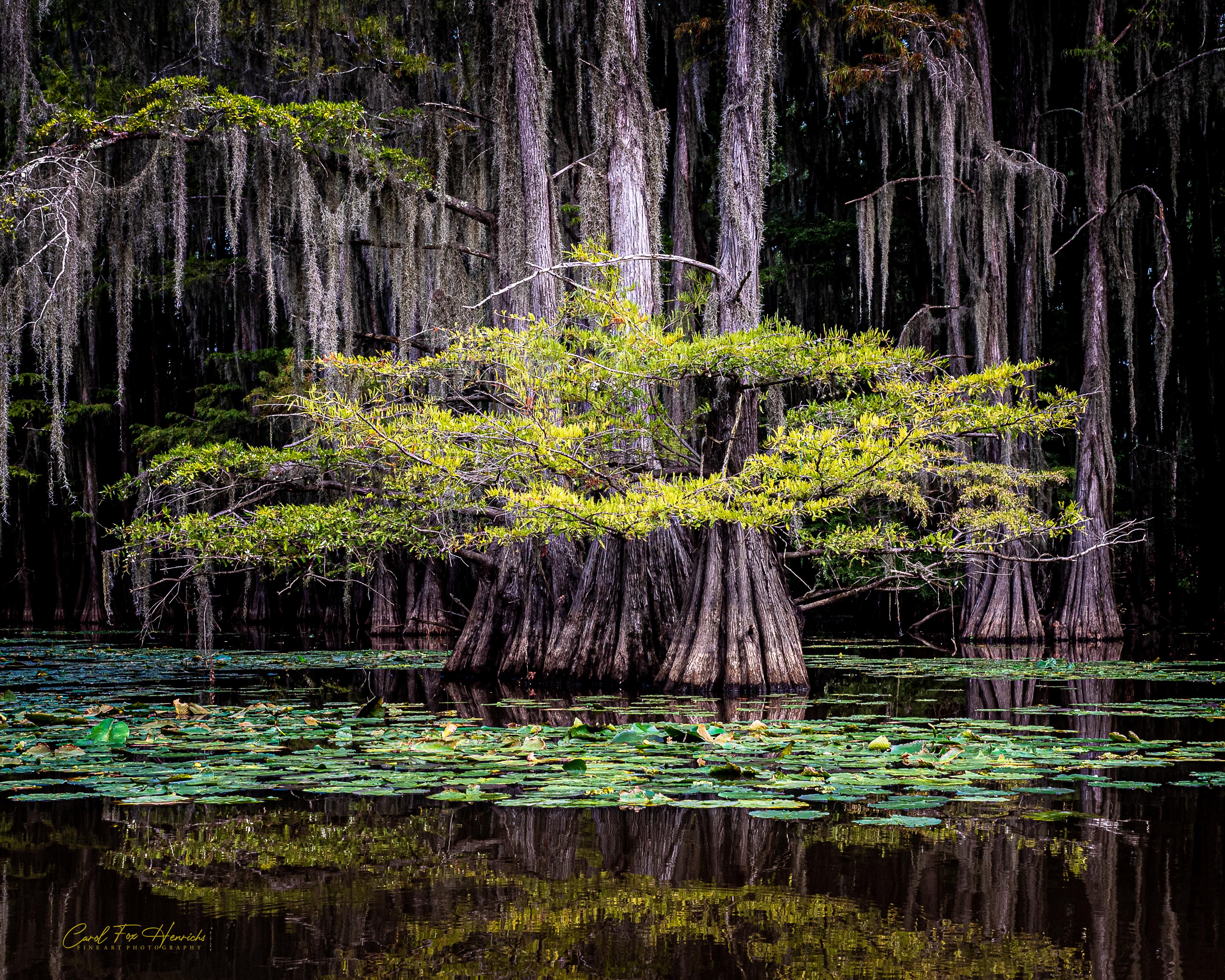 Solitude in the Swamp