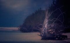 Bahamas by Moonlight