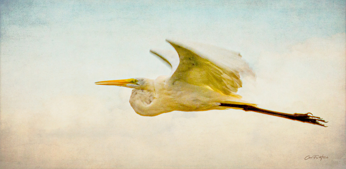 Eye Level With An Egret