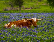 Stereotypical Texas Spring