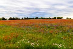 Blanketed in Wildflowers