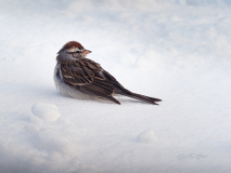Shipping Sparrow on the Snow